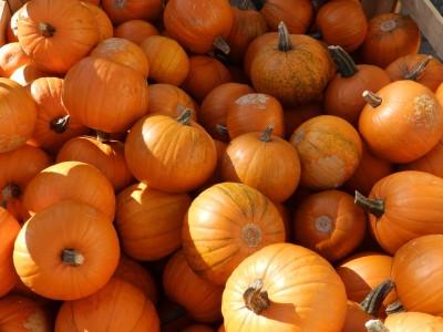 early-years-pumpkin-farm-3