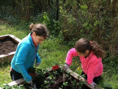 Earth Day 2016 PS Gardening  (2)